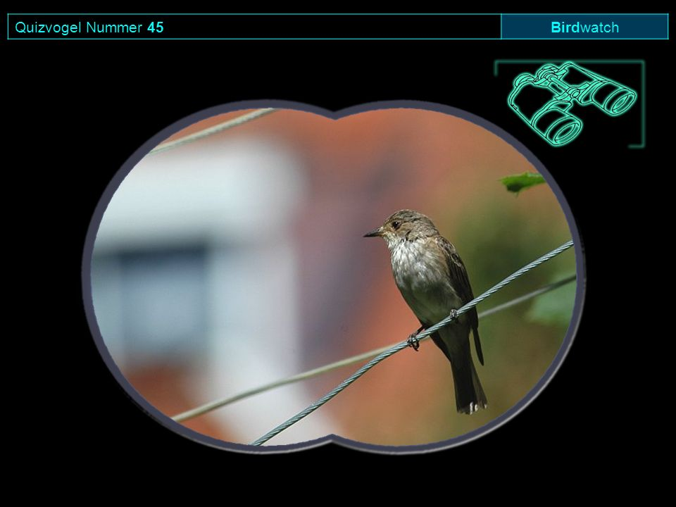 Quizvogel Nummer 45Birdwatch