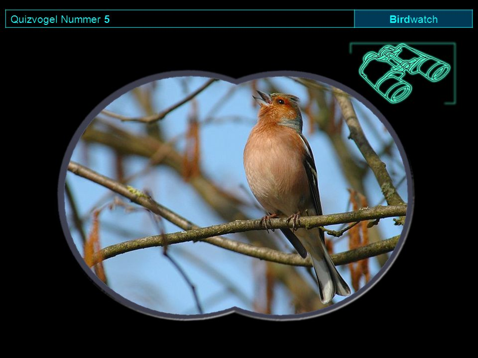Quizvogel Nummer 5Birdwatch