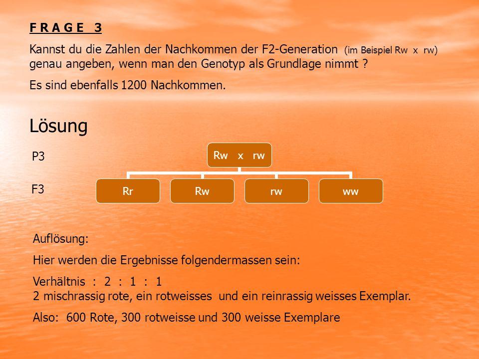 F R A G E 3 Kannst du die Zahlen der Nachkommen der F2-Generation (im Beispiel Rw x rw) genau angeben, wenn man den Genotyp als Grundlage nimmt .