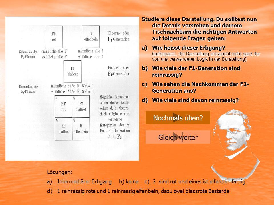 gg x rr gr Ü B U N G am Beispiel eines intermediären Erbgangs P1 F1 Dann die nächste Generation P2 F2 gr x gr gggr rr Deute die Ergebnisse in ihrem Phänotypus Deute die Ergebnisse in ihrem Phänotypus und überlege, welches Hybriden (Bastarde) sind.