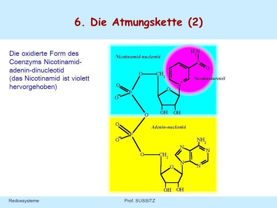 RedoxsystemeProf. SUSSITZ 6. Die Atmungskette (2) Die oxidierte Form des Coenzyms Nicotinamid- adenin-dinucleotid (das Nicotinamid ist violett hervorg