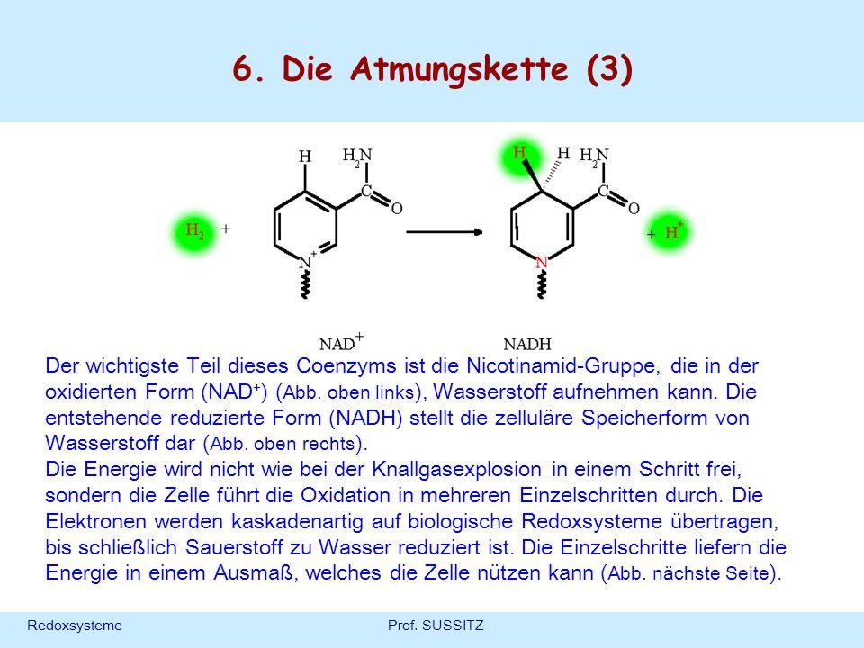 RedoxsystemeProf. SUSSITZ 6. Die Atmungskette (3) Der wichtigste Teil dieses Coenzyms ist die Nicotinamid-Gruppe, die in der oxidierten Form (NAD + )
