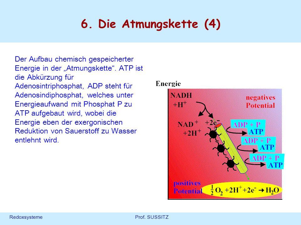 RedoxsystemeProf. SUSSITZ 6. Die Atmungskette (4) Der Aufbau chemisch gespeicherter Energie in der Atmungskette. ATP ist die Abkürzung für Adenosintri