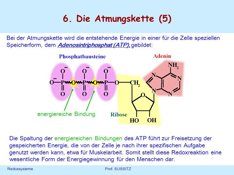 RedoxsystemeProf. SUSSITZ 6. Die Atmungskette (5) Bei der Atmungskette wird die entstehende Energie in einer für die Zelle speziellen Speicherform, de