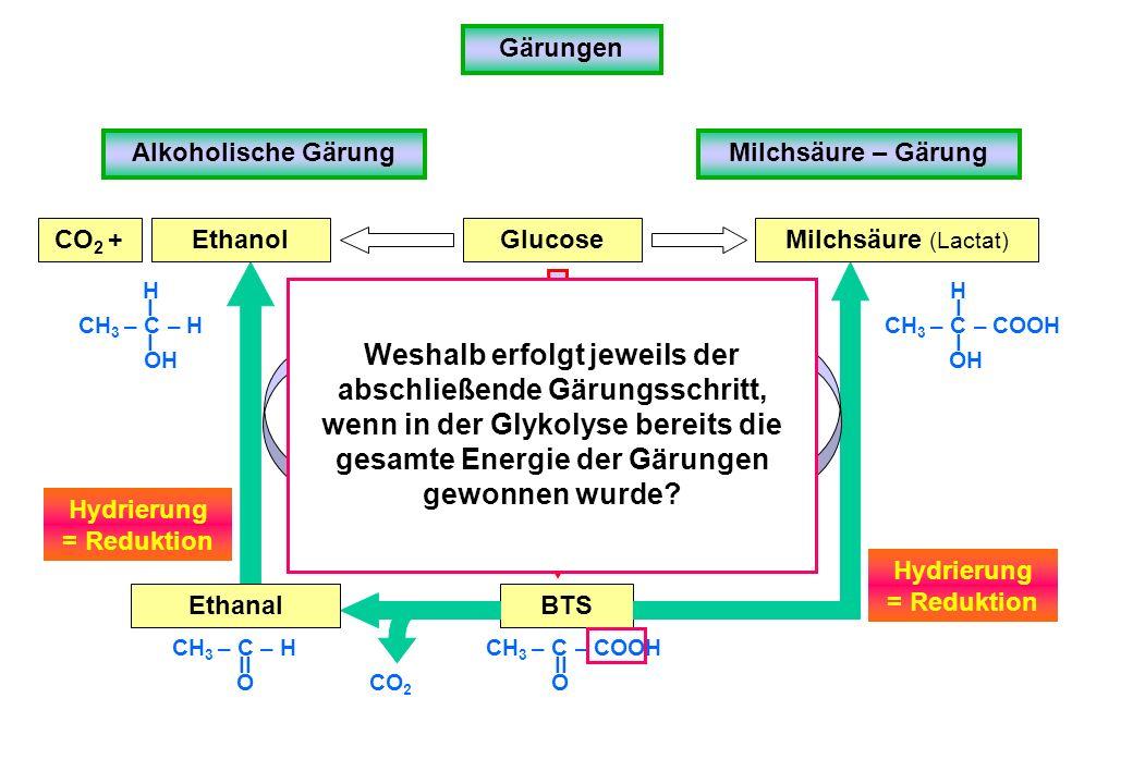 Gärungen Alkoholische GärungMilchsäure – Gärung Glucose BTS Glykolyse CH 3 – C – COOH O II CH 3 – C – COOH Milchsäure (Lactat) NAD + NADH/H + OH H I I