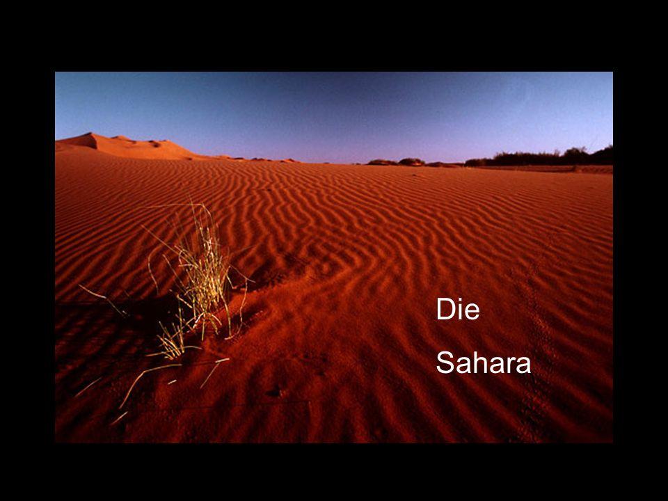 Sahara Die Sahara Die Sahara