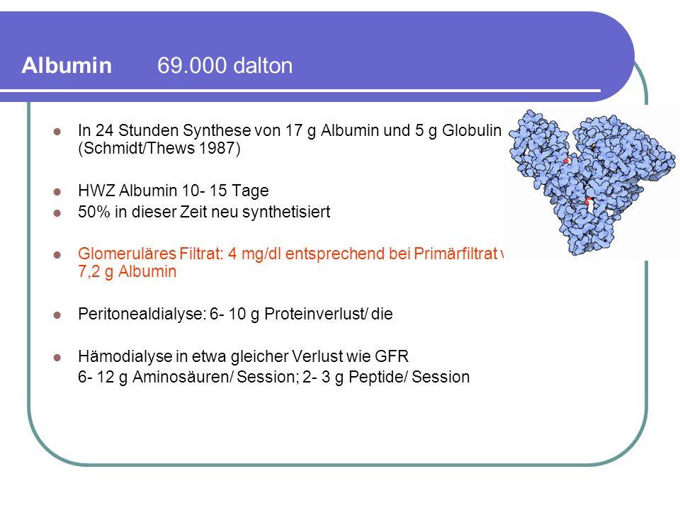 Albumin 69.000 dalton In 24 Stunden Synthese von 17 g Albumin und 5 g Globulin (Schmidt/Thews 1987) HWZ Albumin 10- 15 Tage 50% in dieser Zeit neu synthetisiert Glomeruläres Filtrat: 4 mg/dl entsprechend bei Primärfiltrat von 180 l/die = 7,2 g Albumin Peritonealdialyse: 6- 10 g Proteinverlust/ die Hämodialyse in etwa gleicher Verlust wie GFR 6- 12 g Aminosäuren/ Session; 2- 3 g Peptide/ Session