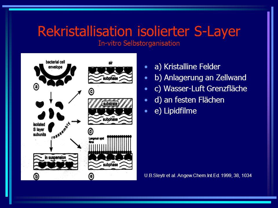 Rekristallisation isolierter S-Layer In-vitro Selbstorganisation a) Kristalline Felder b) Anlagerung an Zellwand c) Wasser-Luft Grenzfläche d) an fest