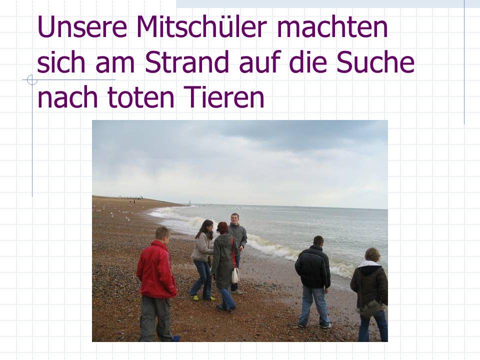 Unsere Mitschüler machten sich am Strand auf die Suche nach toten Tieren