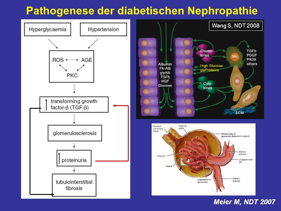 Meier M, NDT 2007 Pathogenese der diabetischen Nephropathie Wang S, NDT 2008