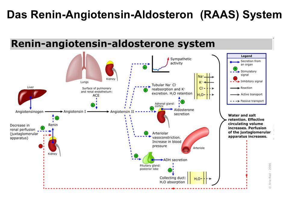 Das Renin-Angiotensin-Aldosteron (RAAS) System