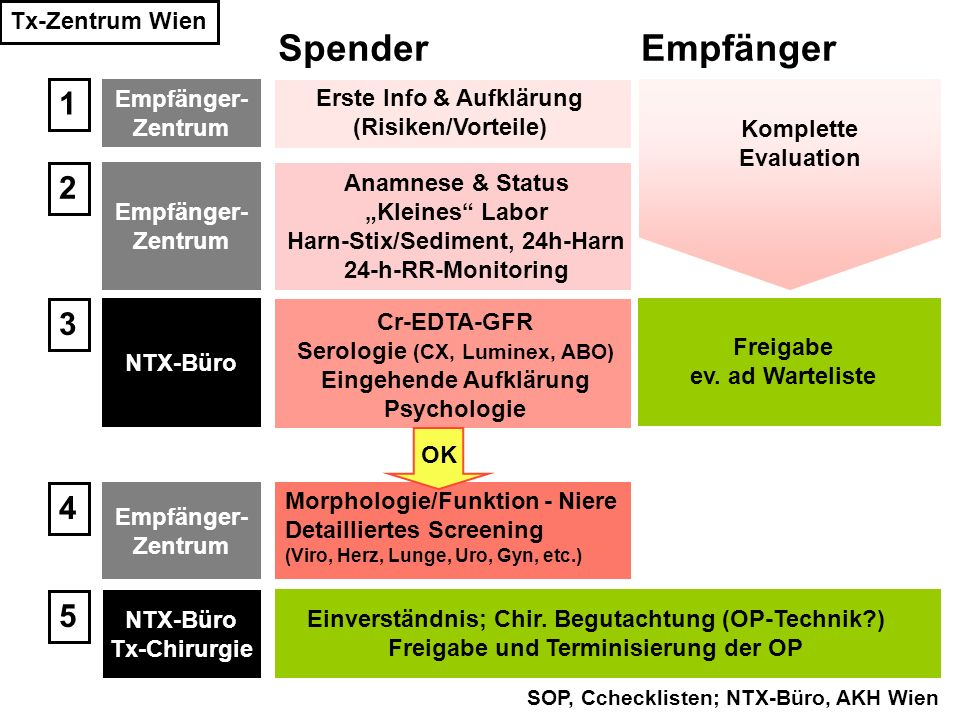 Tx-Zentrum Wien SOP, Cchecklisten; NTX-Büro, AKH Wien Erste Info & Aufklärung (Risiken/Vorteile) Morphologie/Funktion - Niere Detailliertes Screening