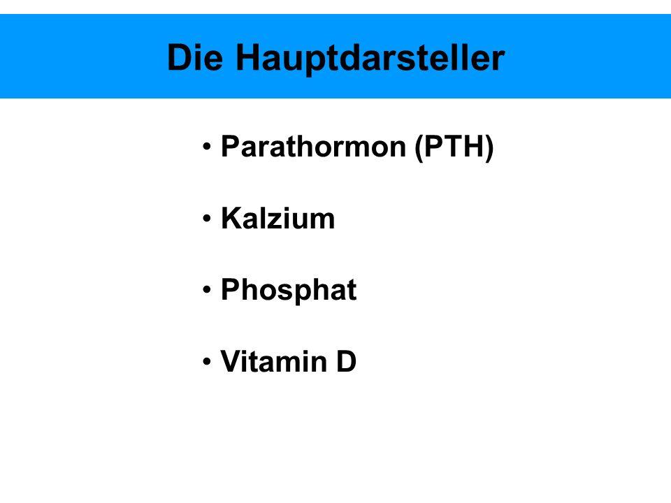 Die Hauptdarsteller Parathormon (PTH) Kalzium Phosphat Vitamin D