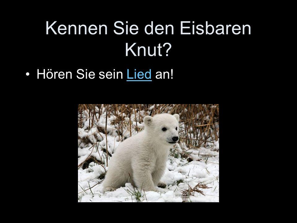 Kennen Sie den Eisbaren Knut Hören Sie sein Lied an!Lied