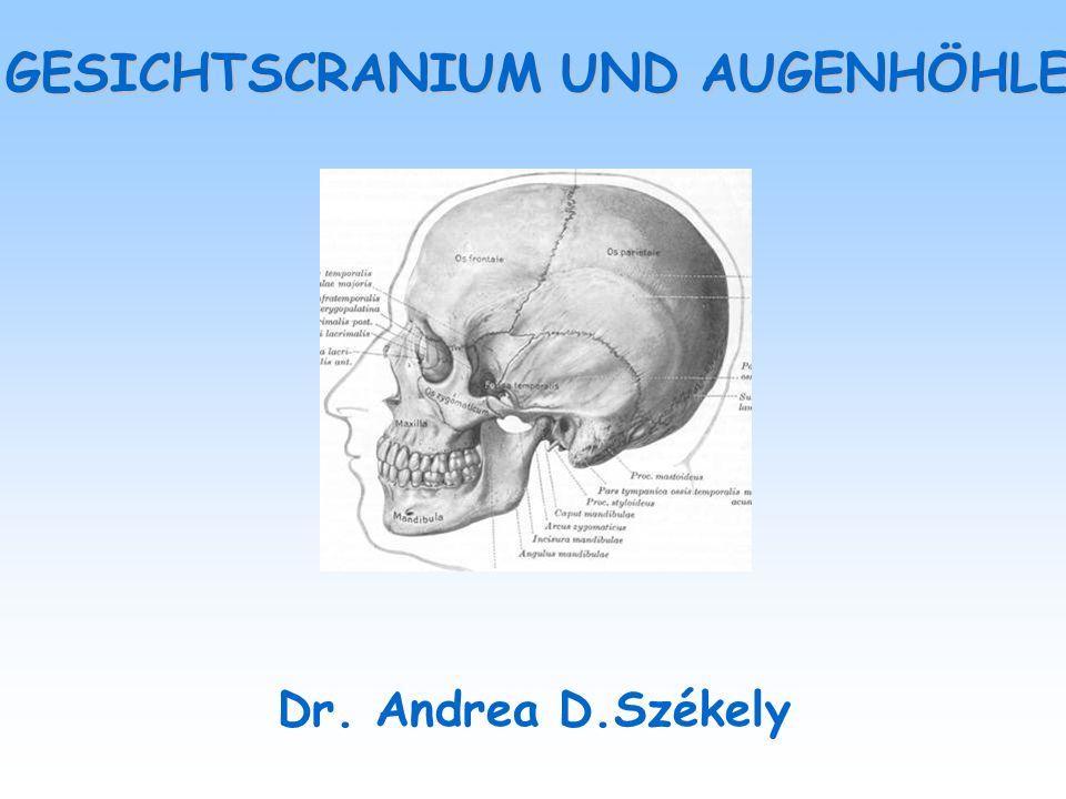 KNÖCHERNE ELEMENTEN DES GESICHTSSCHÄDELS OBERE TEIL - os frontale (teilweise neurocranium) nasale MITTLERE TEIL- os nasale, os lacrimale, maxilla, os zygomaticum, os ethmoidale, os palatinum, vomer, concha nasalis inferior UNTERE TEIL - mandibula