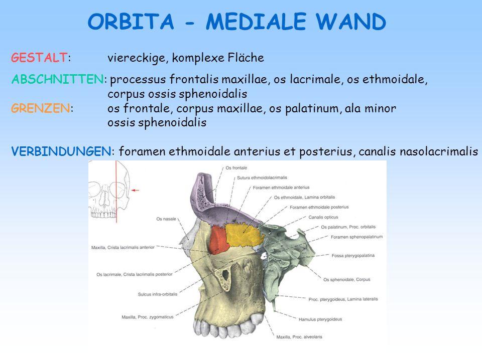 GESTALT:viereckige, komplexe Fläche ABSCHNITTEN: processus frontalis maxillae, os lacrimale, os ethmoidale, corpus ossis sphenoidalis GRENZEN: os fron