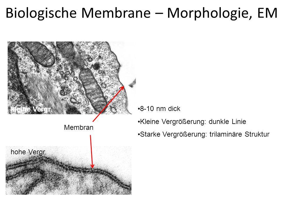 Biomembrane – molekularer Aufbau (unit membran) Flüssig-Mosaik Modell (Singer-Nicholson Modell) Membrane sind asymmetrisch 45% Lipide: Phospholipid Doppelschicht amphiphil Cholesterin (stabilisiert) Glykolipiden 45% Proteine: Spezifizität.