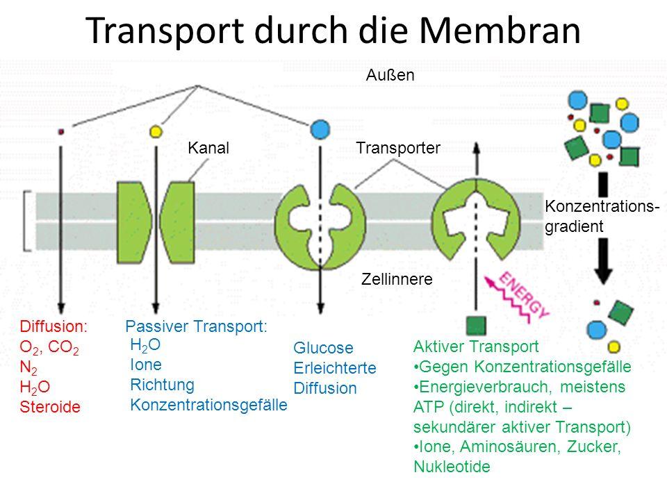 Aktiver Transport ungleiche Ionenverteilung [Na + ] i < [Na + ] e [K + ] i >[K + ] e [Ca 2+ ] i frei <<[Ca 2+ ] i gesamt [Ca 2+ ] i frei << [Ca2 + ] e [Ca 2+ ] i frei (Ruhewert) < [Ca 2+ ] i frei (Aktivierungswert) [Cl - ] i < [Cl - ] e Membranpotenzial elektrische Erregbarkeit vieler Zellen (Nervenzellen)