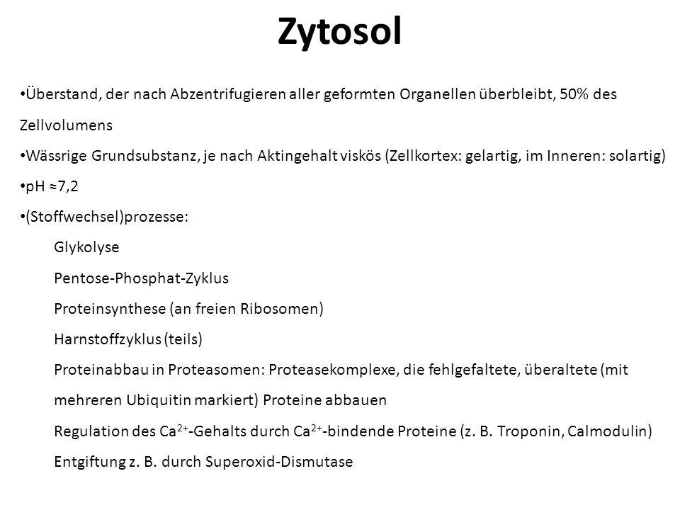 Zytosol Überstand, der nach Abzentrifugieren aller geformten Organellen überbleibt, 50% des Zellvolumens Wässrige Grundsubstanz, je nach Aktingehalt v