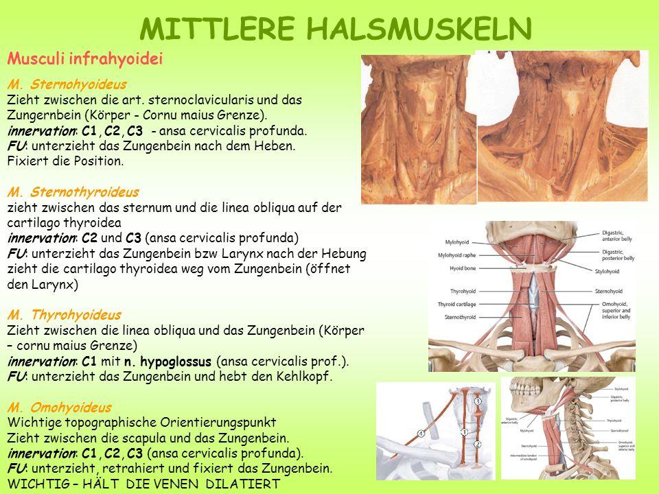 HALSSPATIEN Spatium prevertebrale - zwischen den Wirbelkörpern und der Fascia prevertebrale.