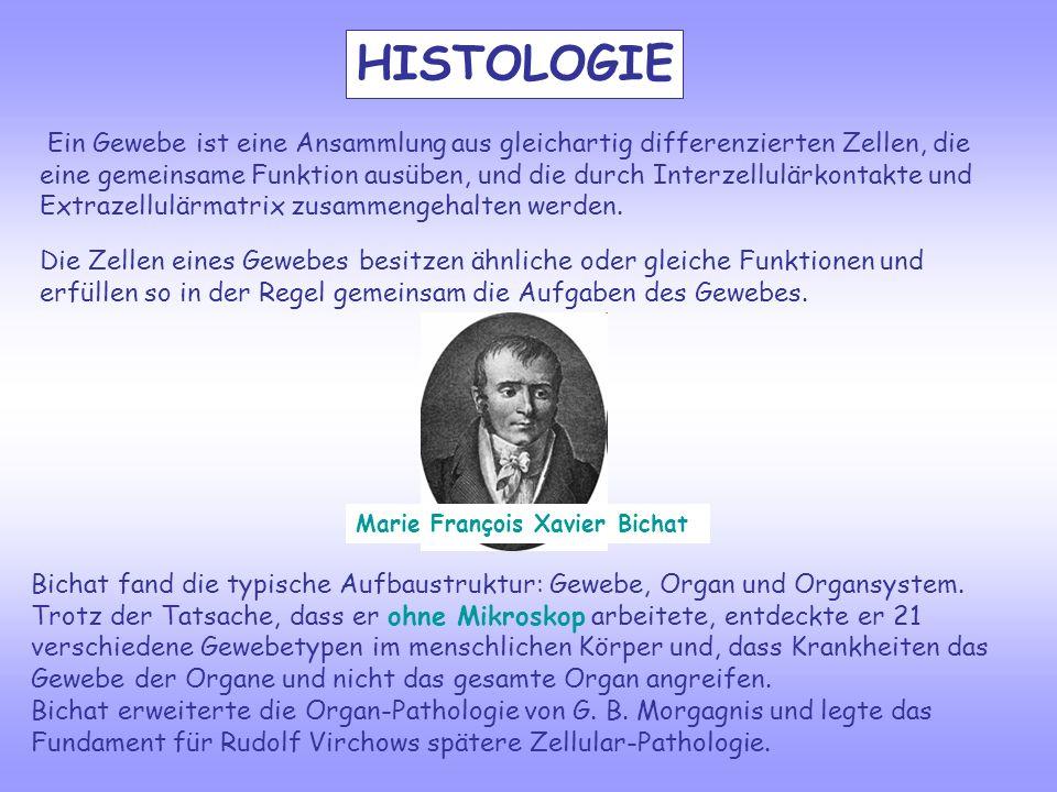 HISTOLOGIE Marie François Xavier Bichat Bichat fand die typische Aufbaustruktur: Gewebe, Organ und Organsystem. Trotz der Tatsache, dass er ohne Mikro