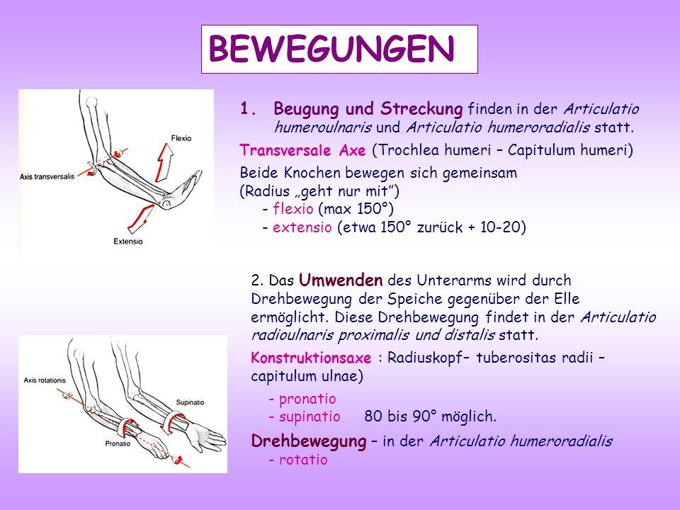 BEWEGUNGEN 2. Das Umwenden des Unterarms wird durch Drehbewegung der Speiche gegenüber der Elle ermöglicht. Diese Drehbewegung findet in der Articulat