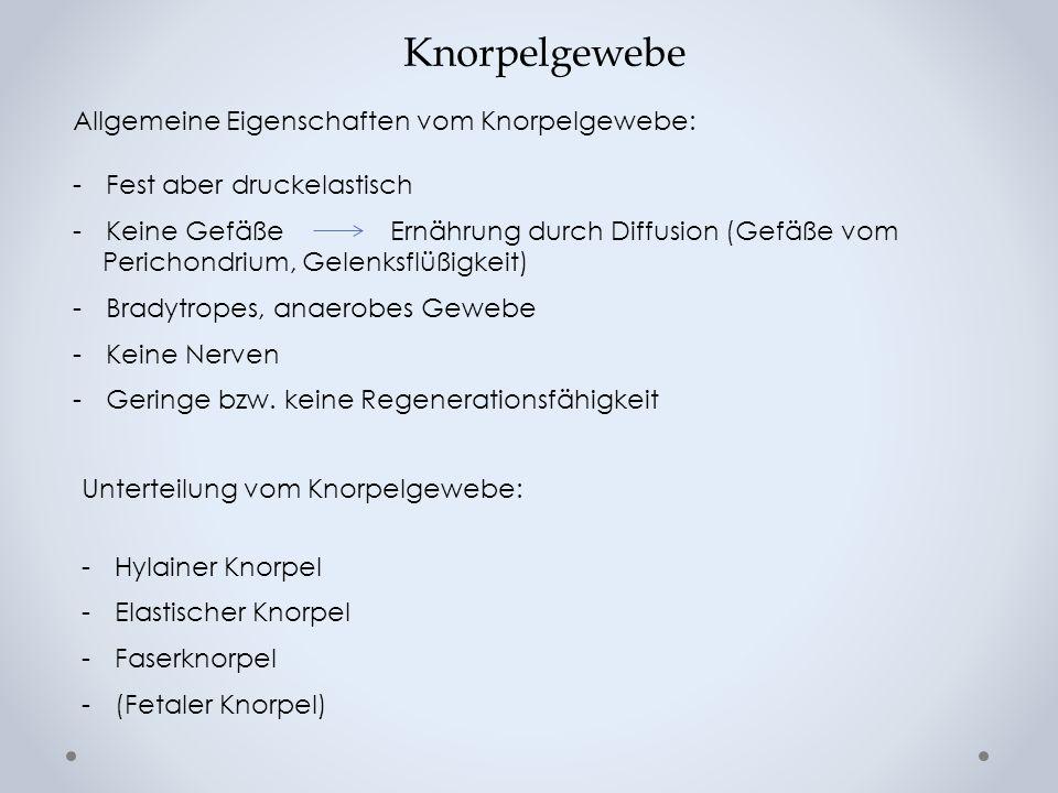 Hyaliner Knorpel (Glasknorpel) Chondorne (2-8) Knorpelzellen Kollagenfaser: Typ II(, IX, X, XI) Amorphe Grundsubstanz und Typische territoriale Gliederung Perichondrium (Gelenkknorpel aus- genommen) Vorkommen: -Rippenknorpel -Gelenkknorpel -Atemwege Histopatolog.