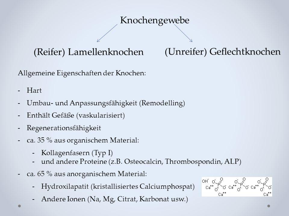 Abb.: P. Röhlich