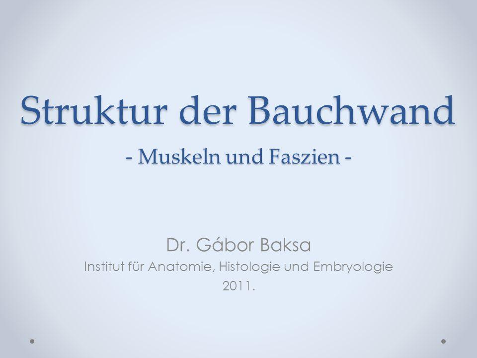 Struktur der Bauchwand - Muskeln und Faszien - Dr. Gábor Baksa Institut für Anatomie, Histologie und Embryologie 2011.