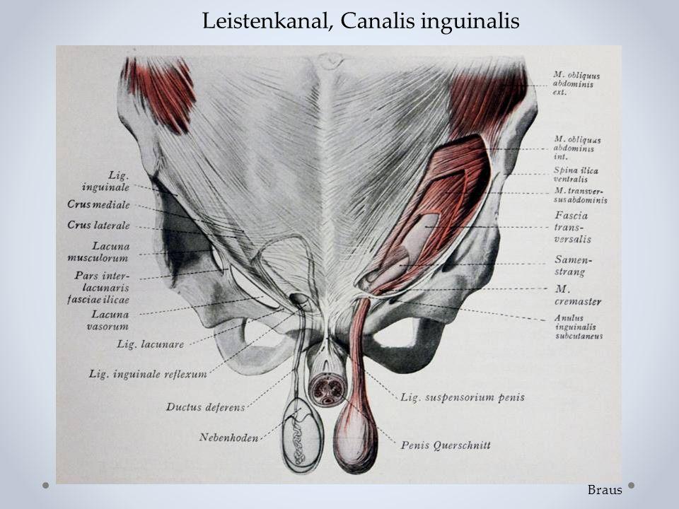 Braus Leistenkanal, Canalis inguinalis