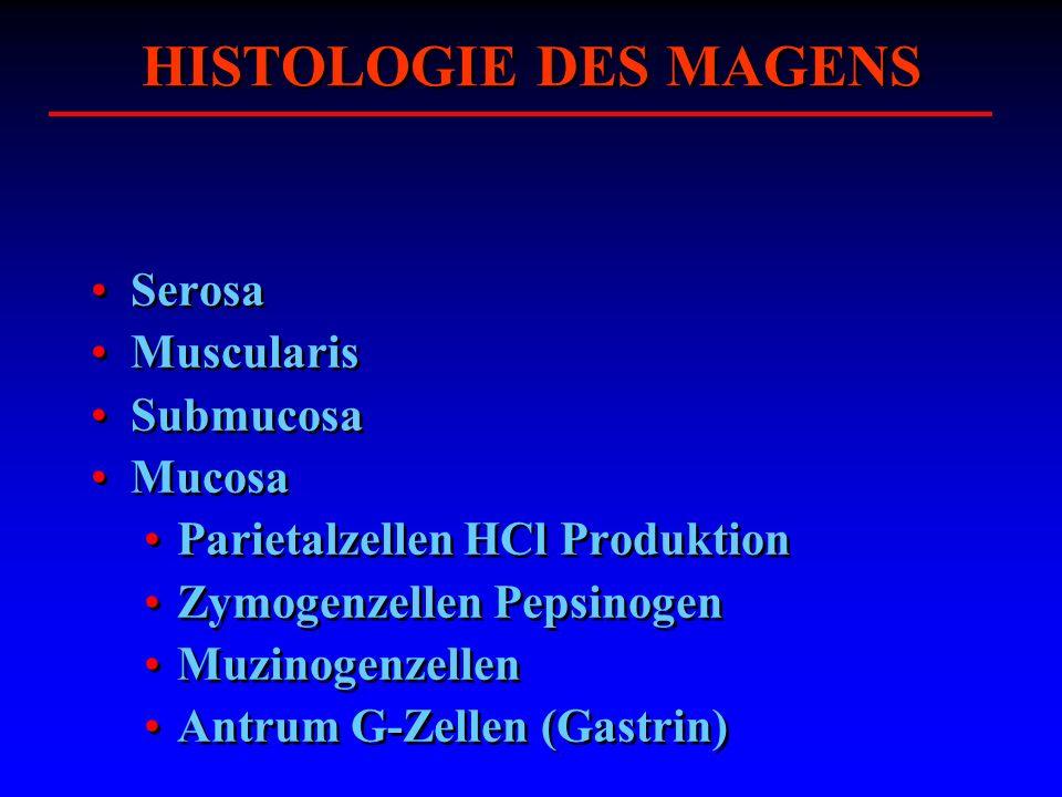 HISTOLOGIE DES MAGENS Serosa Muscularis Submucosa Mucosa Parietalzellen HCl Produktion Zymogenzellen Pepsinogen Muzinogenzellen Antrum G-Zellen (Gastr