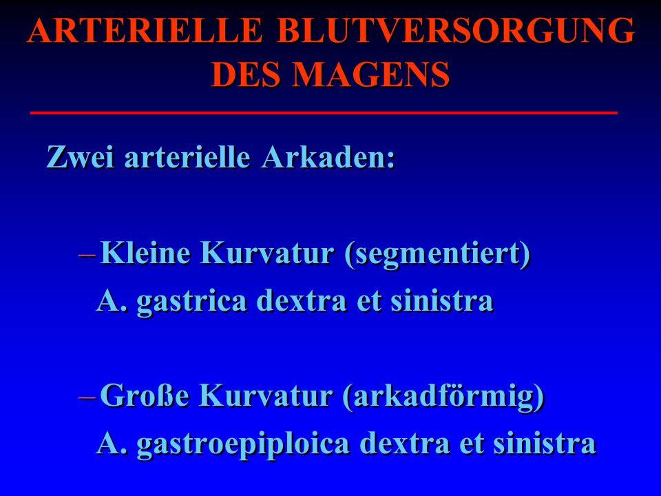ARTERIELLE BLUTVERSORGUNG DES MAGENS Zwei arterielle Arkaden: –Kleine Kurvatur (segmentiert) A. gastrica dextra et sinistra –Große Kurvatur (arkadförm