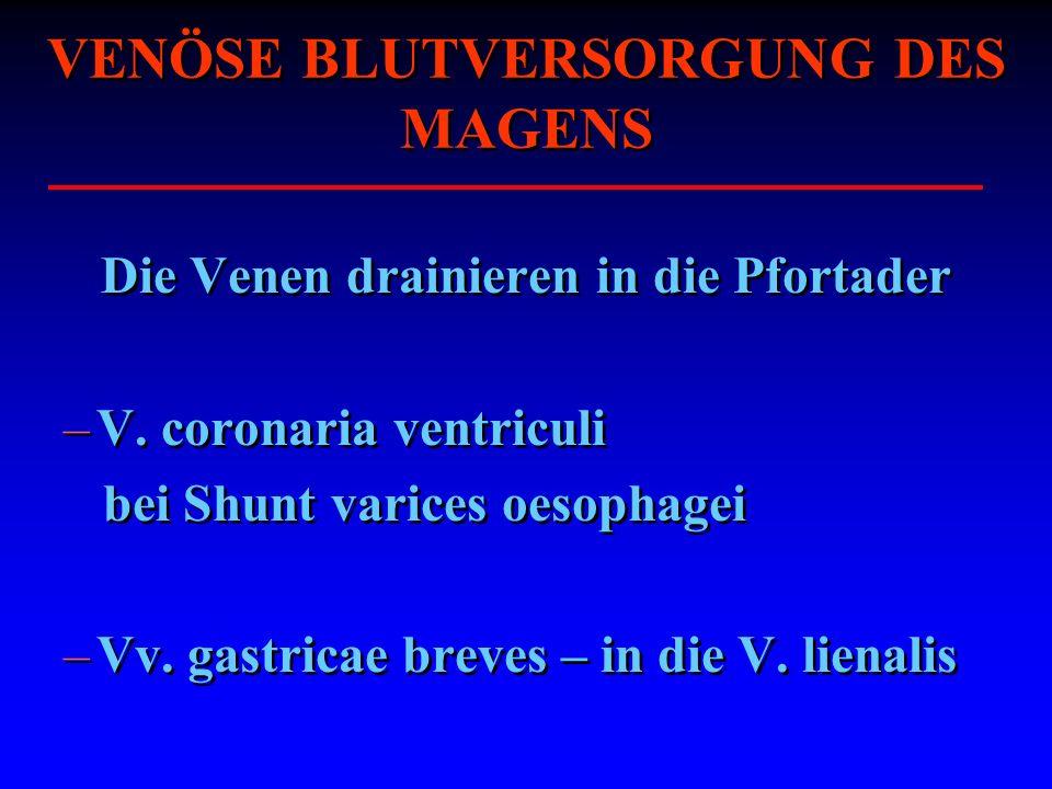 VENÖSE BLUTVERSORGUNG DES MAGENS Die Venen drainieren in die Pfortader –V. coronaria ventriculi bei Shunt varices oesophagei –Vv. gastricae breves – i