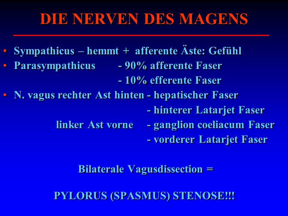DIE NERVEN DES MAGENS Sympathicus – hemmt + afferente Äste: Gefühl Parasympathicus - 90% afferente Faser - 10% efferente Faser N. vagus rechter Ast hi