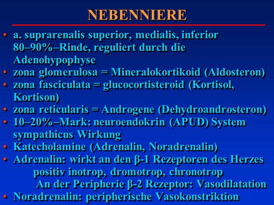 NEBENNIERE a. suprarenalis superior, medialis, inferior 80–90%–Rinde, reguliert durch die Adenohypophysea. suprarenalis superior, medialis, inferior 8
