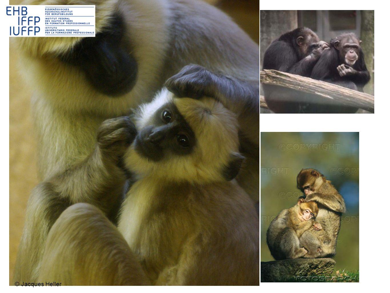 mais....Si les singes sépouillent, ce nest pas parce quils ont des poux, mais par convivialité....