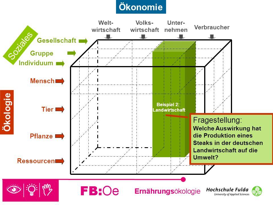 sehen denken handeln Beispiel 2: Landwirtschaft Fragestellung: Welche Auswirkung hat die Produktion eines Steaks in der deutschen Landwirtschaft auf d
