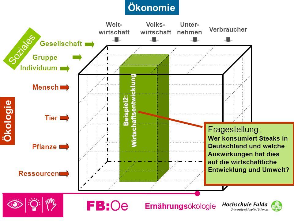 sehen denken handeln Beispiel 2 Fragestellung: Welche Ressourcen werden durch den Konsum eines Steaks verbraucht und wie wirkt sich das auf die Wirtschaft in Deutschland aus.