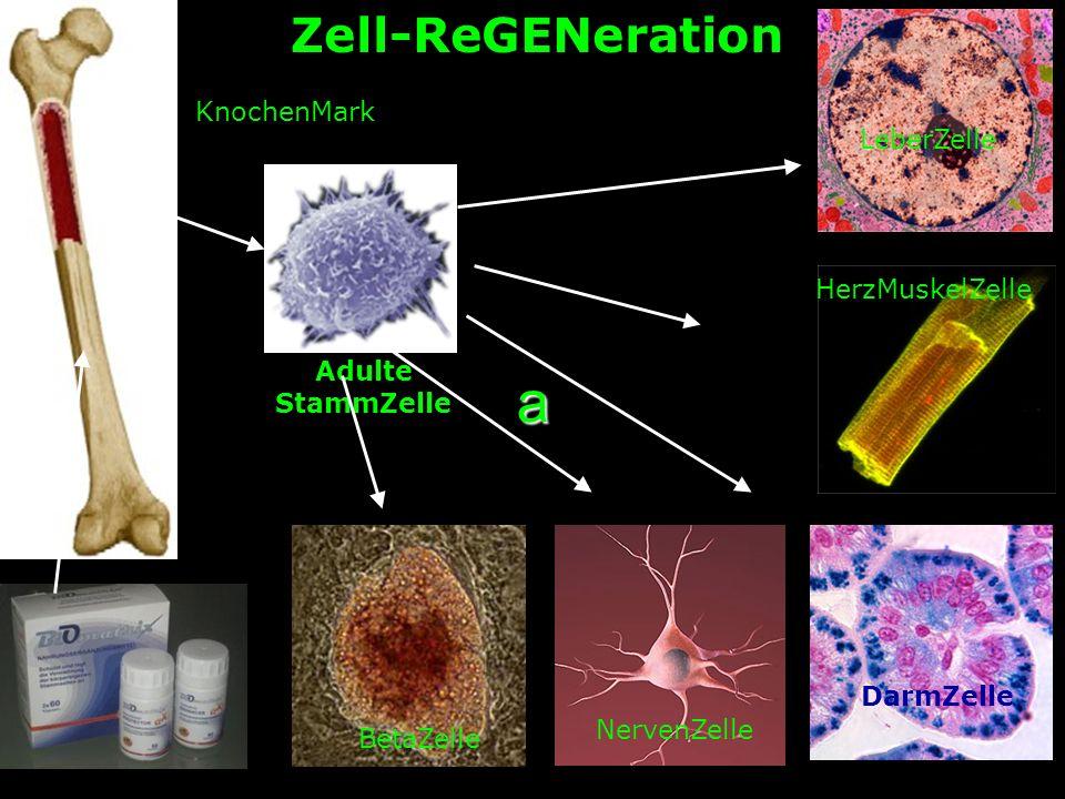 a BetaZelle NervenZelle DarmZelle HerzMuskelZelle LeberZelle Adulte StammZelle KnochenMark Zell-ReGENeration
