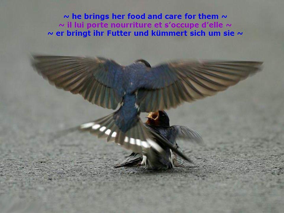 ~ he brings her food and care for them ~ ~ il lui porte nourriture et soccupe delle ~ ~ er bringt ihr Futter und kümmert sich um sie ~