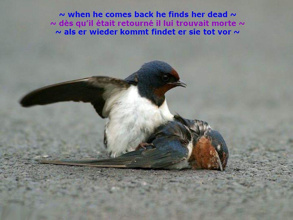 ~ when he comes back he finds her dead ~ ~ dès quil était retourné il lui trouvait morte ~ ~ als er wieder kommt findet er sie tot vor ~