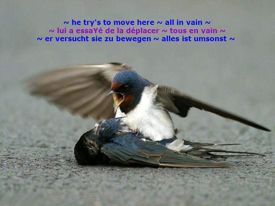 ~ he try's to move here ~ all in vain ~ ~ lui a essaYé de la déplacer ~ tous en vain ~ ~ er versucht sie zu bewegen ~ alles ist umsonst ~