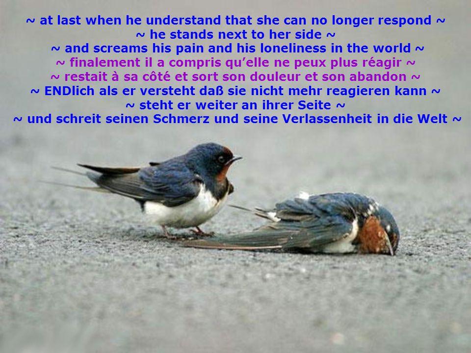 ~ L VE does not have to find some-one with whom theY can LIVING ~ ~ L VE IS in the heart ~ and is this essence there ~ ~ ALLL IS accomplised°°°))) ~ ~ lAM UR ne doit pas dabord trouver quelquun pour vivre avec ~ ~ lAM UR EST dans le cœur ~ et dès que cet être EST là ~ ~ TOUT EST accomplit°°°))) ~ ~ LIEBE muss nicht erst Jemand finden mit dem sie LEBEN kann ~ ~ LIEBE IST im HERZen ~ und IST dieses Wesen da ~ ~ hat sich ALLLES erfüllt°°°))) ~