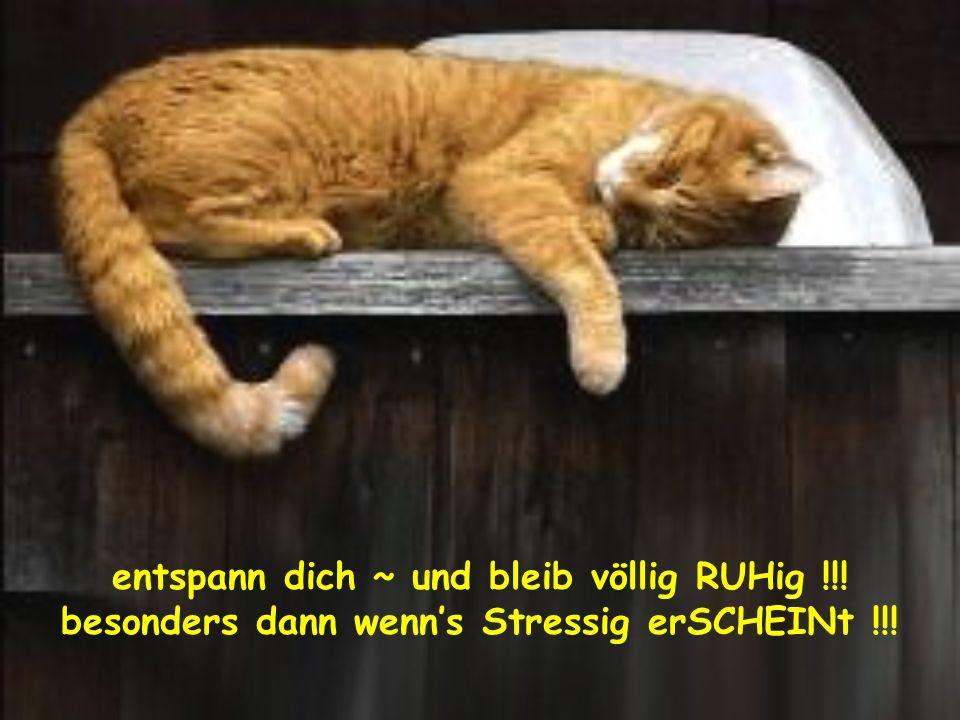 entspann dich ~ und bleib völlig RUHig !!! besonders dann wenns Stressig erSCHEINt !!!