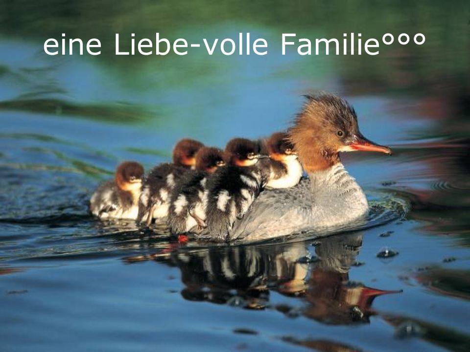 eine Liebe-volle Familie°°°