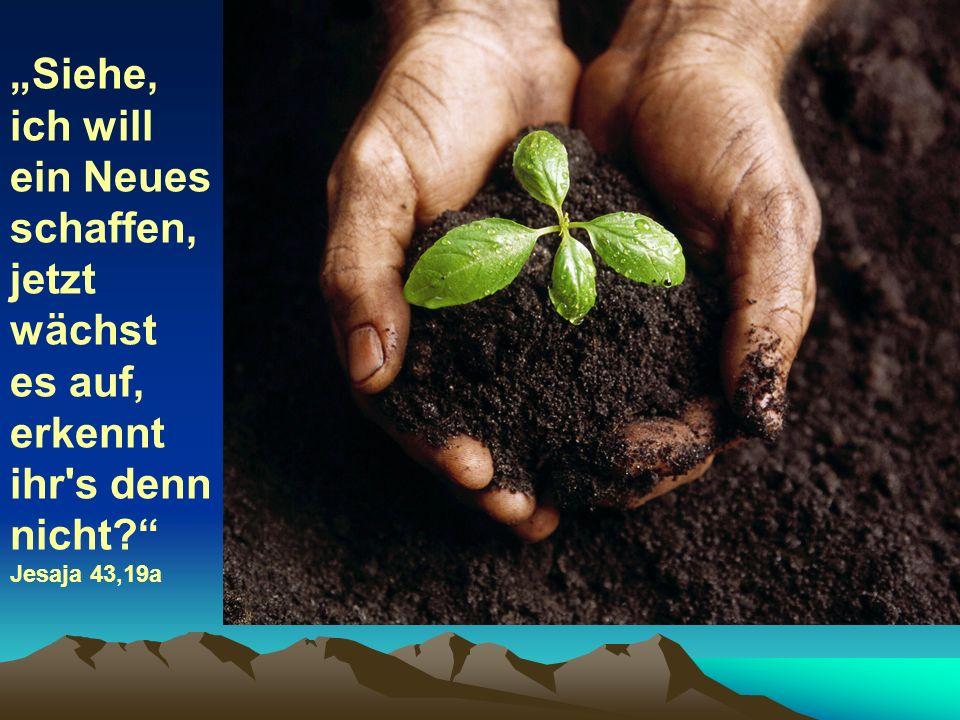 Siehe, ich will ein Neues schaffen, jetzt wächst es auf, erkennt ihr's denn nicht? Jesaja 43,19a