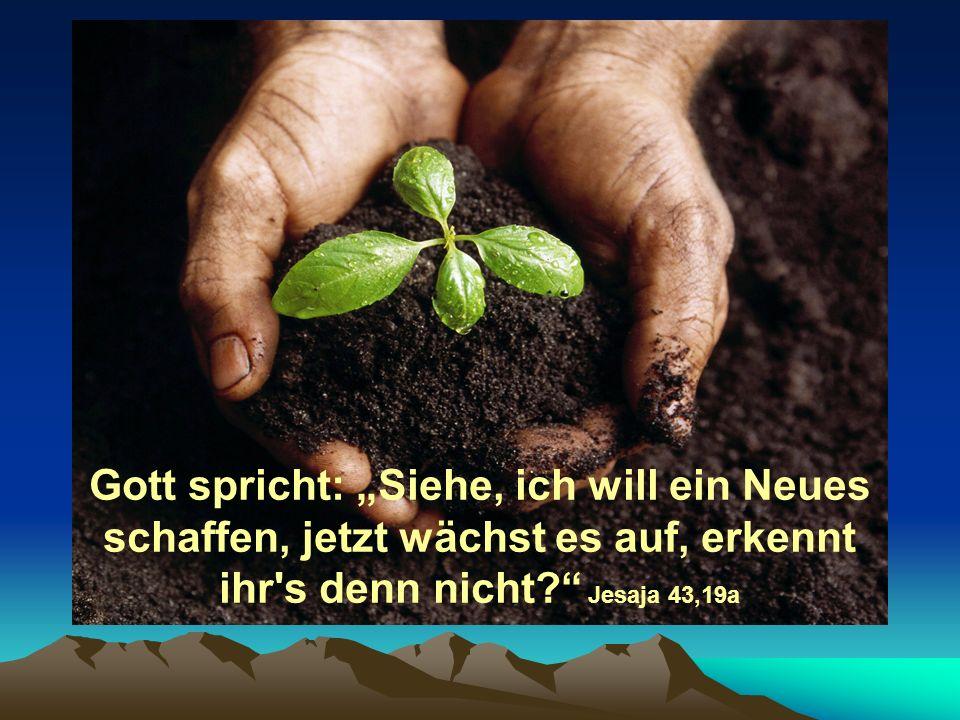 Gott spricht: Siehe, ich will ein Neues schaffen, jetzt wächst es auf, erkennt ihr's denn nicht? Jesaja 43,19a