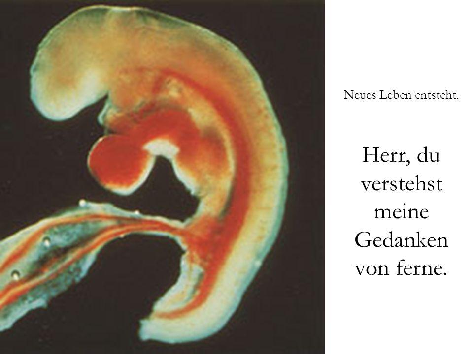 Eine Spermie befruchtet eine Eizelle. Herr, du erforschst mich und kennst mich.
