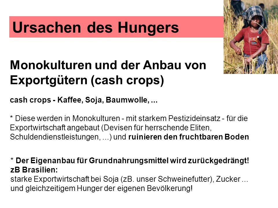Ursachen des Hungers Monokulturen und der Anbau von Exportgütern (cash crops) cash crops - Kaffee, Soja, Baumwolle,... * Diese werden in Monokulturen