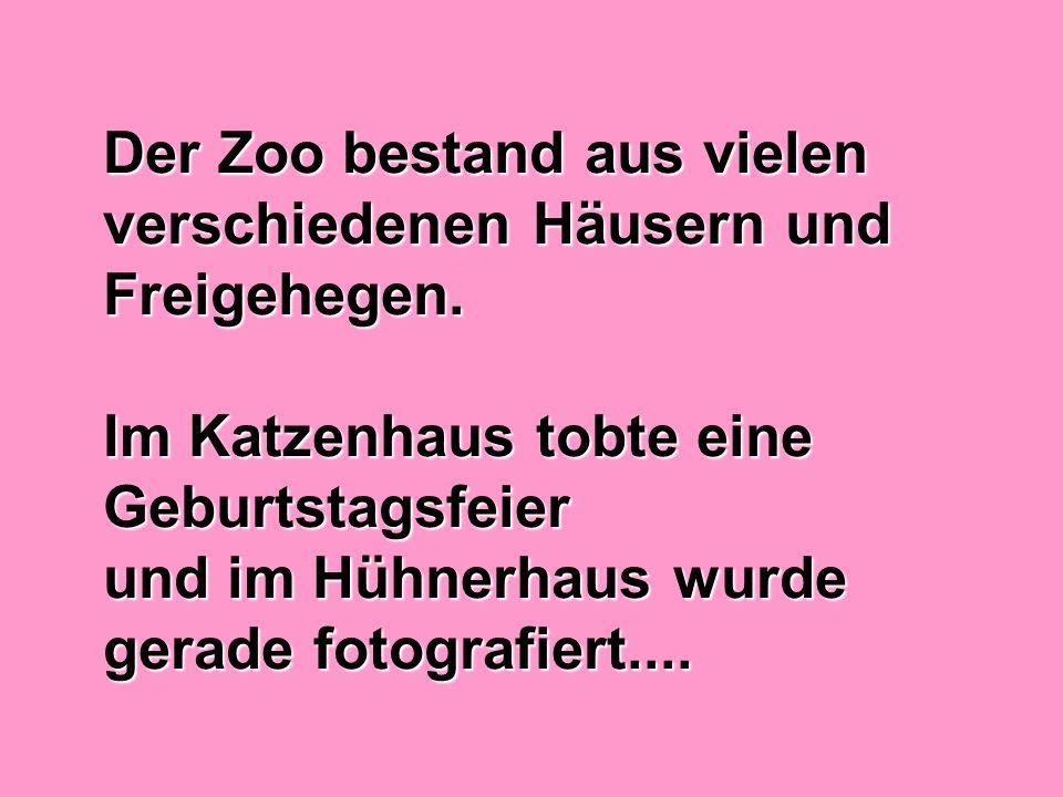 Der Zoo bestand aus vielen verschiedenen Häusern und Freigehegen. Im Katzenhaus tobte eine Geburtstagsfeier und im Hühnerhaus wurde gerade fotografier